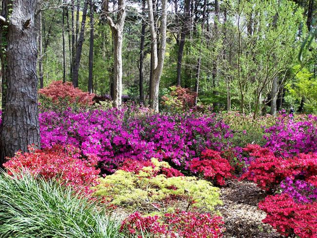 multicoloredbushes