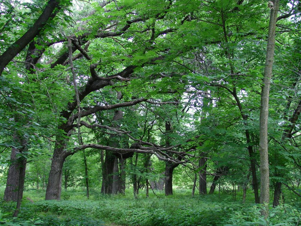 overhanging_tree