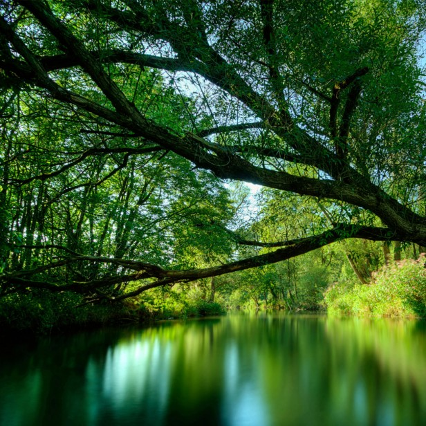 tree_hanging_over_water