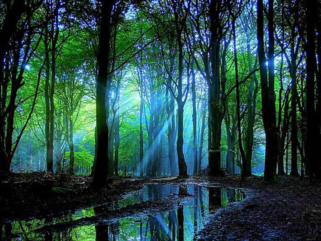 Forest dusk Wallpaper__yvt2
