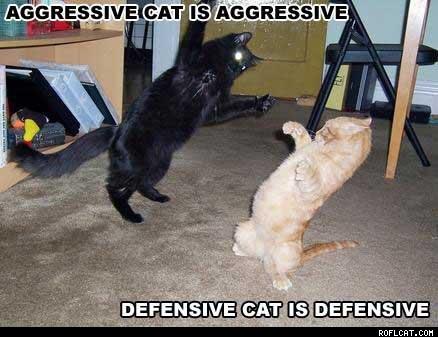 aggressivedefensive