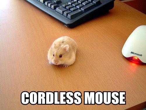 cordless-mouse