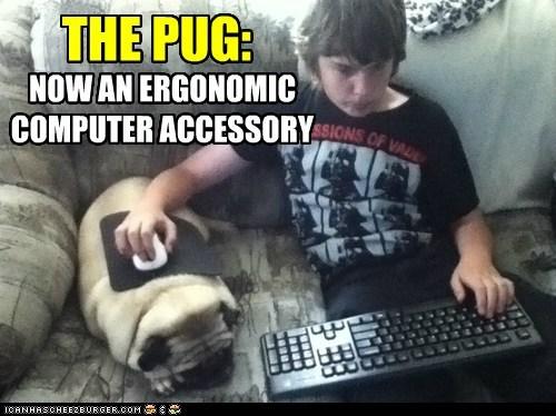 ergonomic-pug