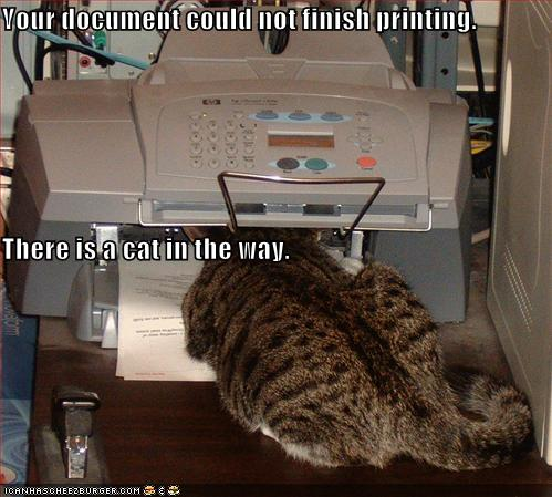 funny-pictures-cat-in-printer