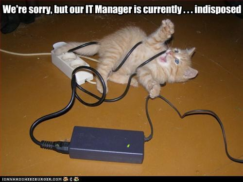 it-cat-is-indisposed