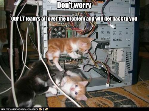 it-kittens