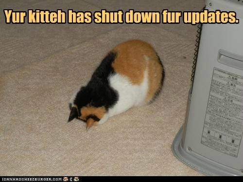 kitteh-shutdown