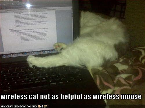 wirelesscat